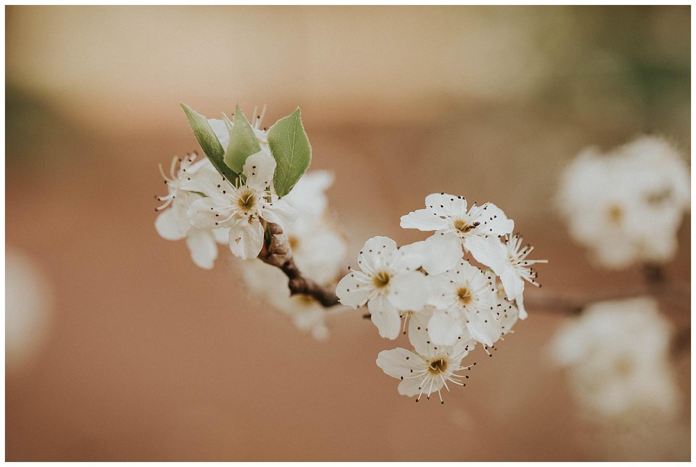 Flowers at Araluen Botanic Gardens, Perth